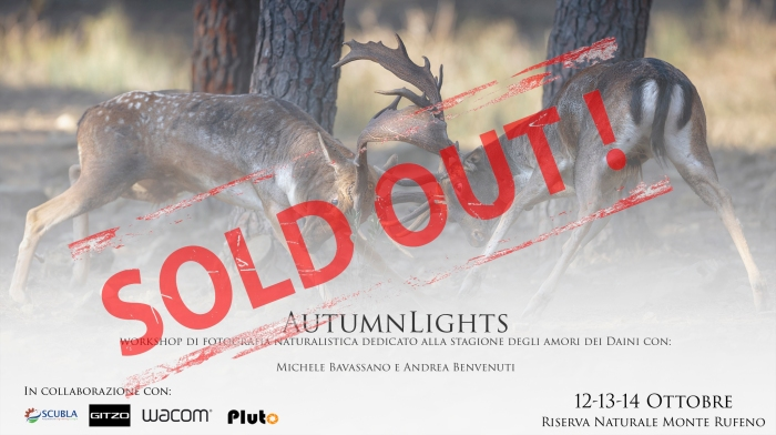 sold out AutumnLights