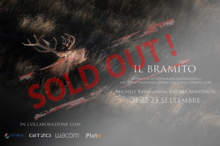Sold out bramito