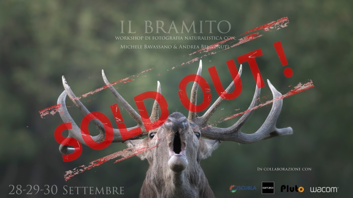Workshop Il Bramito II sold out
