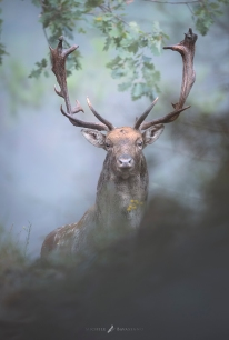 """King in the fog"
